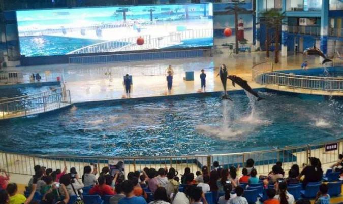 <b>开封海洋馆+海狮表演一日游</b>
