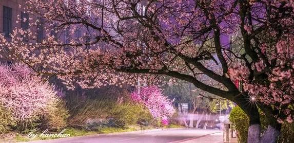 武汉樱花季纯玩两日游